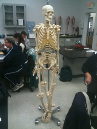 AnatandPhys Bones Fischer Williams Photo0056