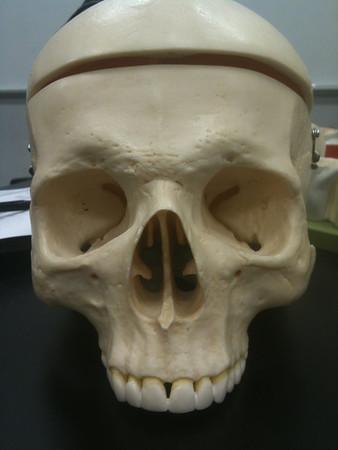 AnatandPhys Bones Fischer Williams Photo0050